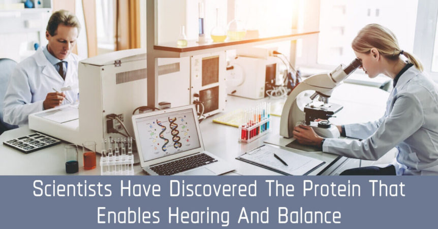 Scientists Have Discovered the Protein That Enables Hearing and Balance